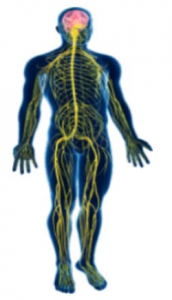 Be Alive Physiotherapy - Get In Touch With Your Body